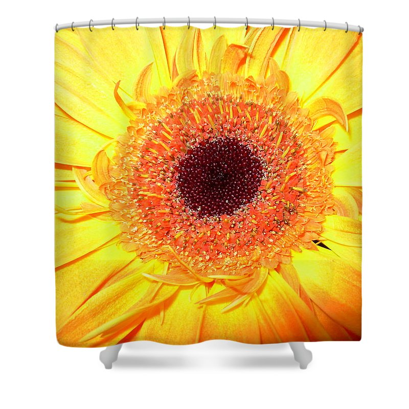 Gerbera Photographs Shower Curtain featuring the photograph 3418 by Kimberlie Gerner