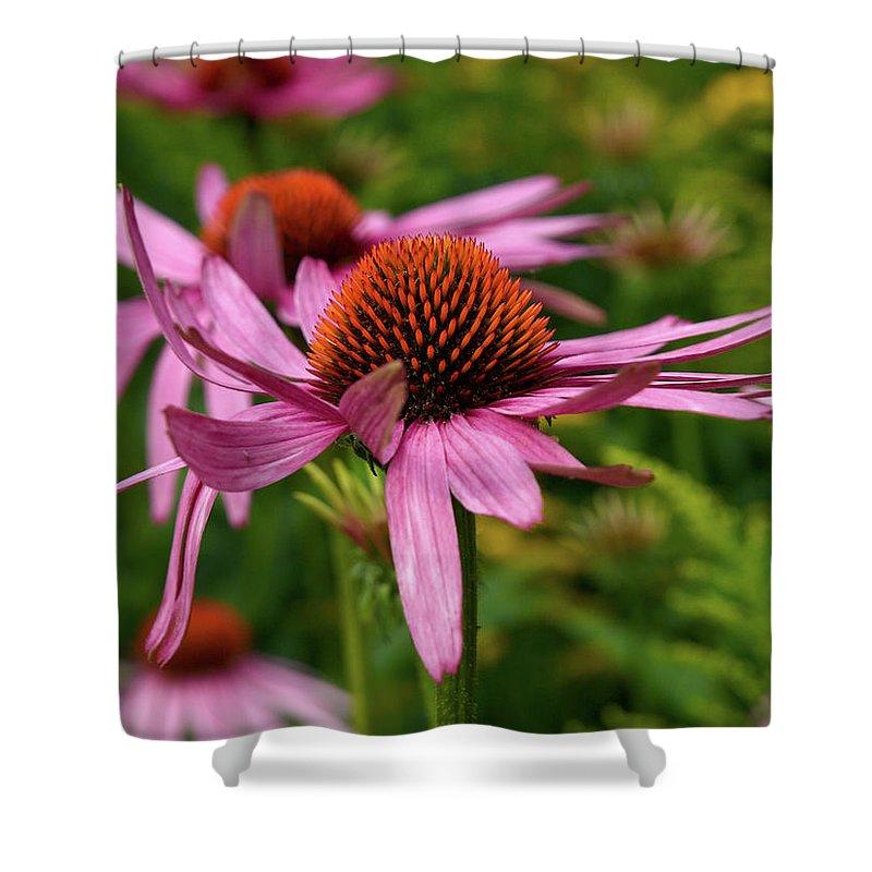 Jouko Lehto Shower Curtain featuring the photograph Eastern Purple Coneflower by Jouko Lehto