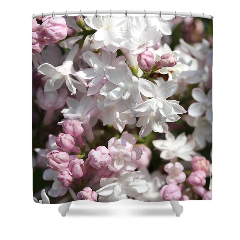 Lilac Shower Curtain featuring the photograph Lilac Named Beauty Of Moscow by J McCombie