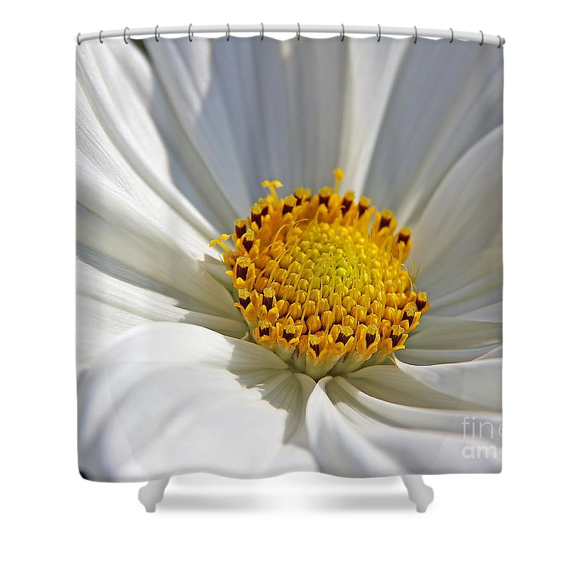 Flowers Shower Curtain featuring the photograph White Cosmos by Jack Schultz