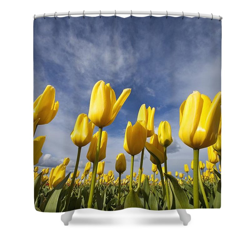 Sky Shower Curtain featuring the photograph Woodburn, Oregon, United States Of by Craig Tuttle