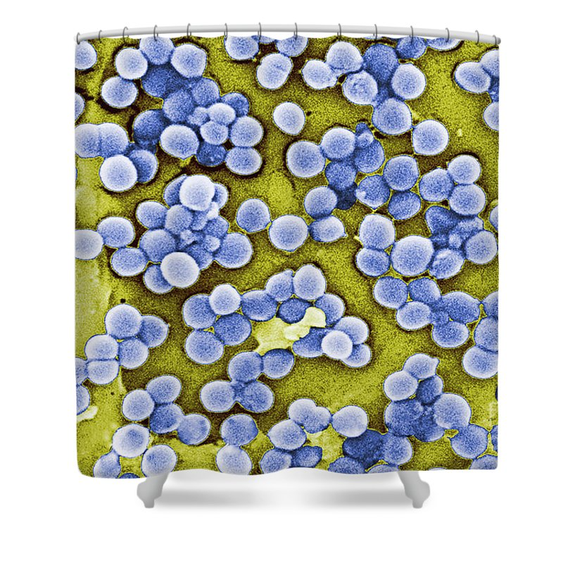 Virulent Shower Curtain featuring the photograph Methicillin-resistant Staphylococcus by Science Source