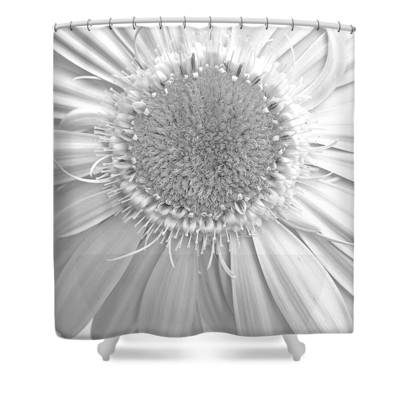 Gerbera Photographs Shower Curtain featuring the photograph 4764.3.4 by Kimberlie Gerner