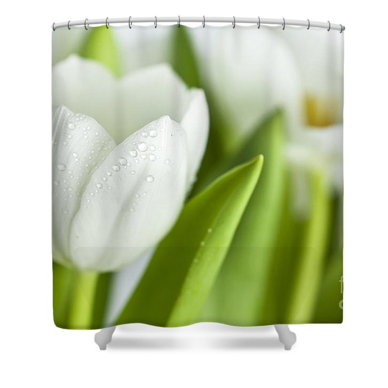 Dew Shower Curtain featuring the photograph White Tulips by Nailia Schwarz