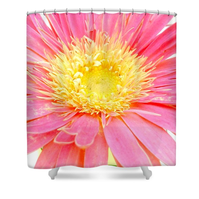 Gerbera Photographs Shower Curtain featuring the photograph 5436c1-004 by Kimberlie Gerner