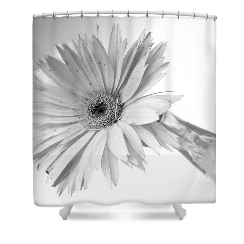 Gerbera Photographs Shower Curtain featuring the photograph 5495c3 by Kimberlie Gerner