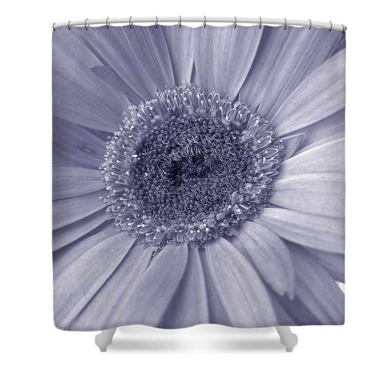 Gerbera Photographs Shower Curtain featuring the photograph 5540c8 by Kimberlie Gerner