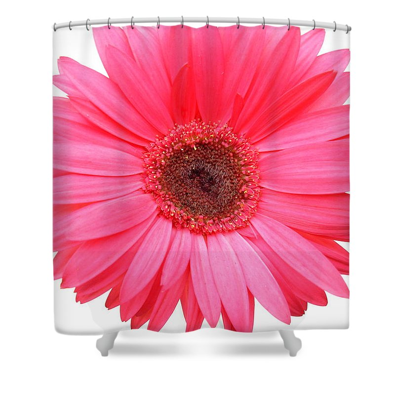 Gerbera Photographs Shower Curtain featuring the photograph 5557 by Kimberlie Gerner