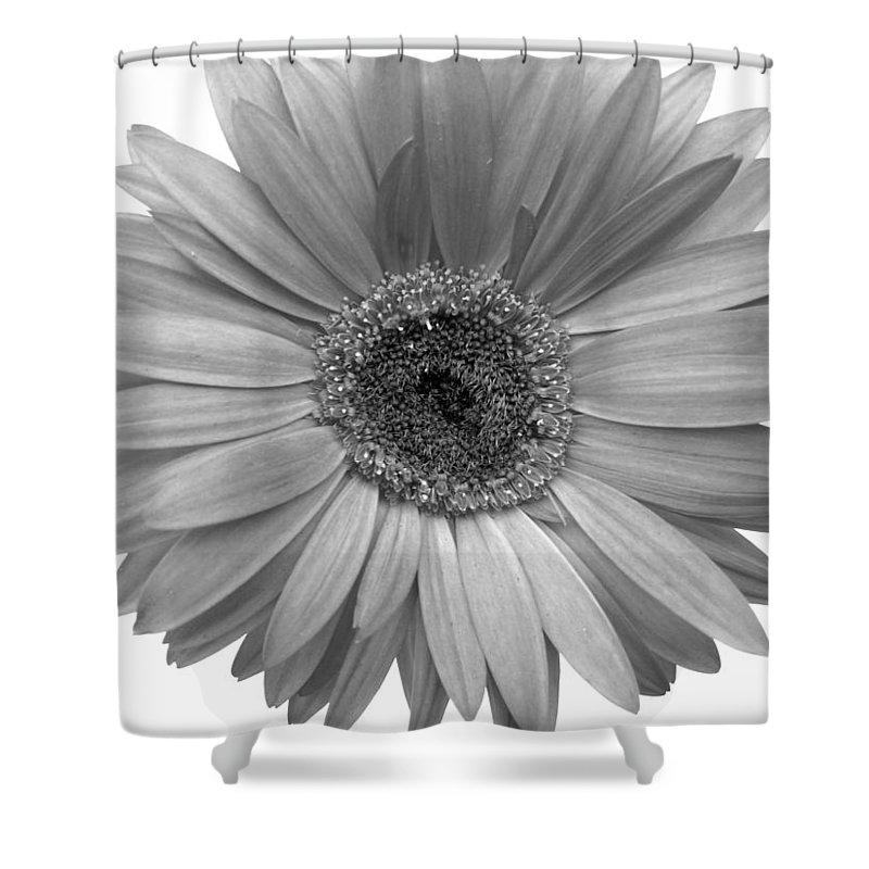 Gerbera Photographs Shower Curtain featuring the photograph 5557c4 by Kimberlie Gerner