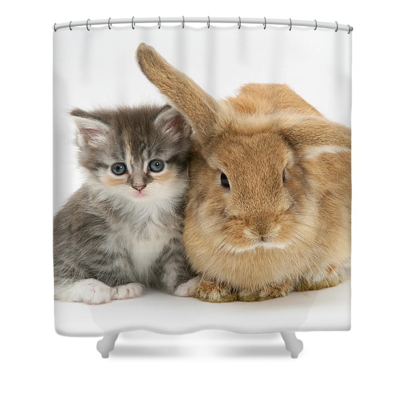 Animal Shower Curtain featuring the photograph Kitten And Rabbit by Mark Taylor