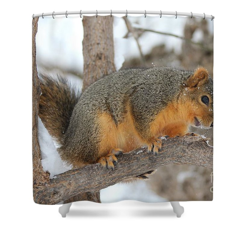 Squirrel Shower Curtain featuring the photograph Squirrel by Lori Tordsen