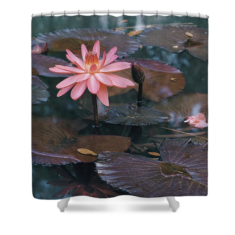 mc Kee Garden Shower Curtain featuring the photograph Untitled by B. Anthony Stewart