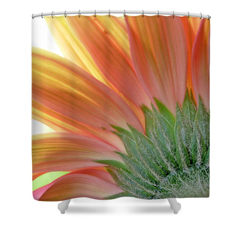 Gerbera Photographs Shower Curtain featuring the photograph 62582 by Kimberlie Gerner