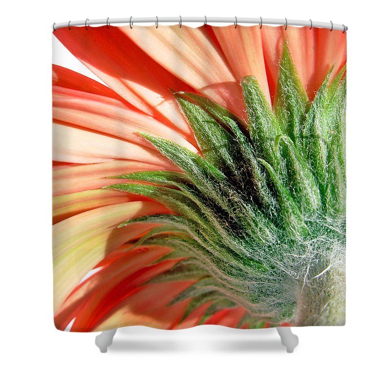 Gerbera Photographs Shower Curtain featuring the photograph 63172 by Kimberlie Gerner