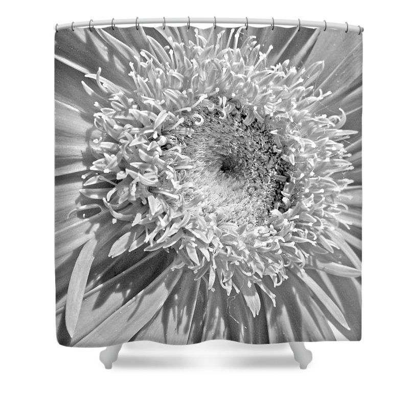 Gerbera Photographs Shower Curtain featuring the photograph 63321c by Kimberlie Gerner