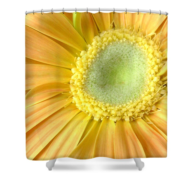 Gerbera Photographs Shower Curtain featuring the photograph 67111a-002 by Kimberlie Gerner