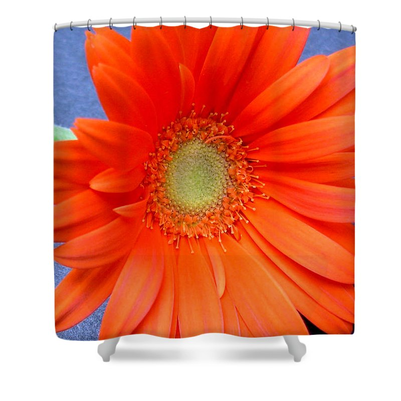 Gerbera Photographs Shower Curtain featuring the photograph 67441a by Kimberlie Gerner