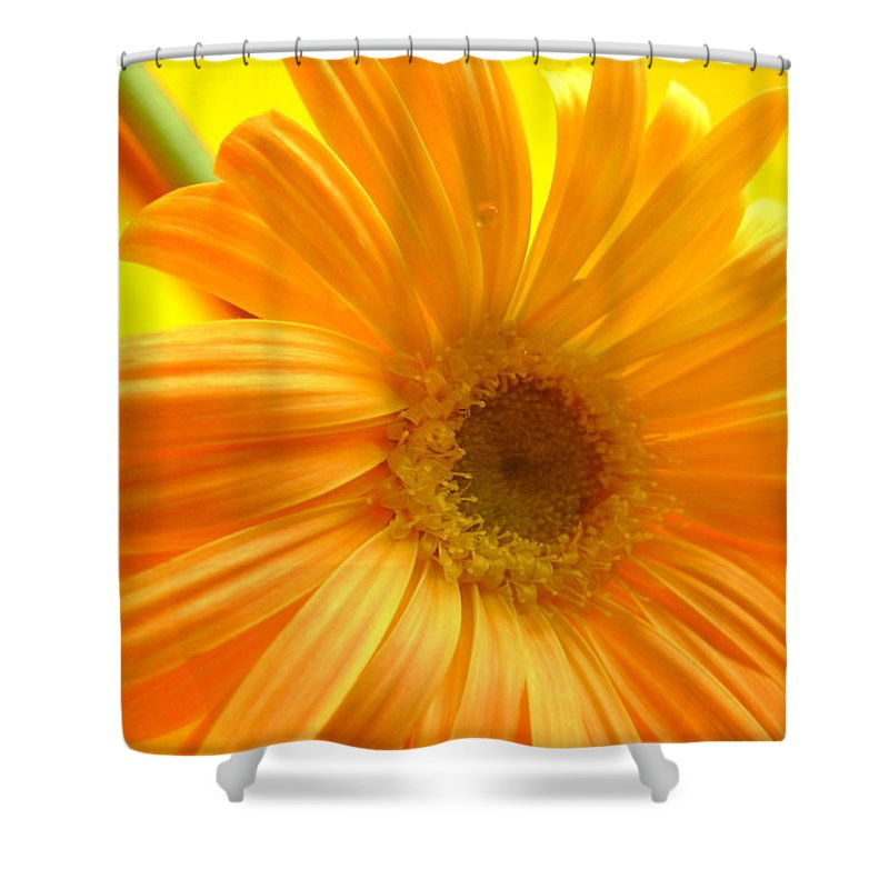 Gerbera Photographs Shower Curtain featuring the photograph 7321-007 by Kimberlie Gerner