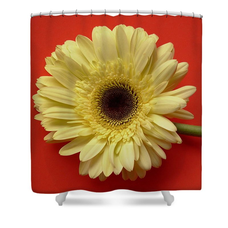Gerbera Photographs Shower Curtain featuring the photograph 7711 by Kimberlie Gerner
