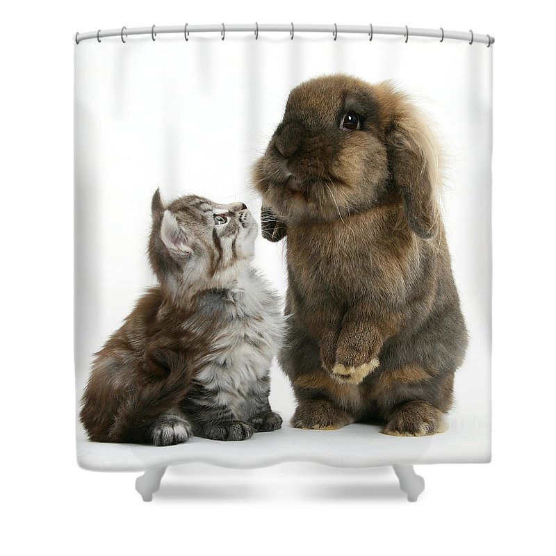 Maine Coon Kitten Shower Curtain featuring the photograph Kitten And Rabbit by Mark Taylor