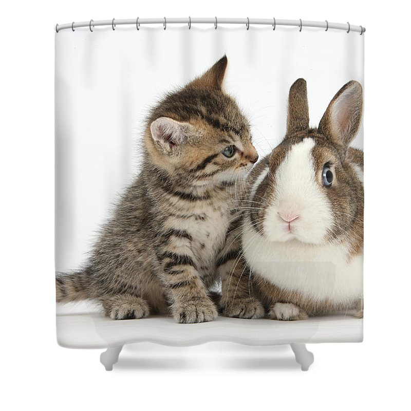Nature Shower Curtain featuring the photograph Kitten And Rabbit by Mark Taylor