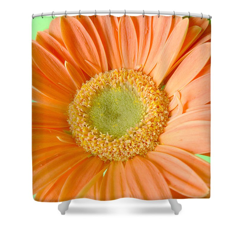 Gerbera Photographs Shower Curtain featuring the photograph 93721a1 by Kimberlie Gerner