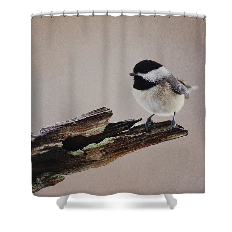 Shenandoah Valley Shower Curtain featuring the photograph A Black-capped Chickadee by George F. Mobley