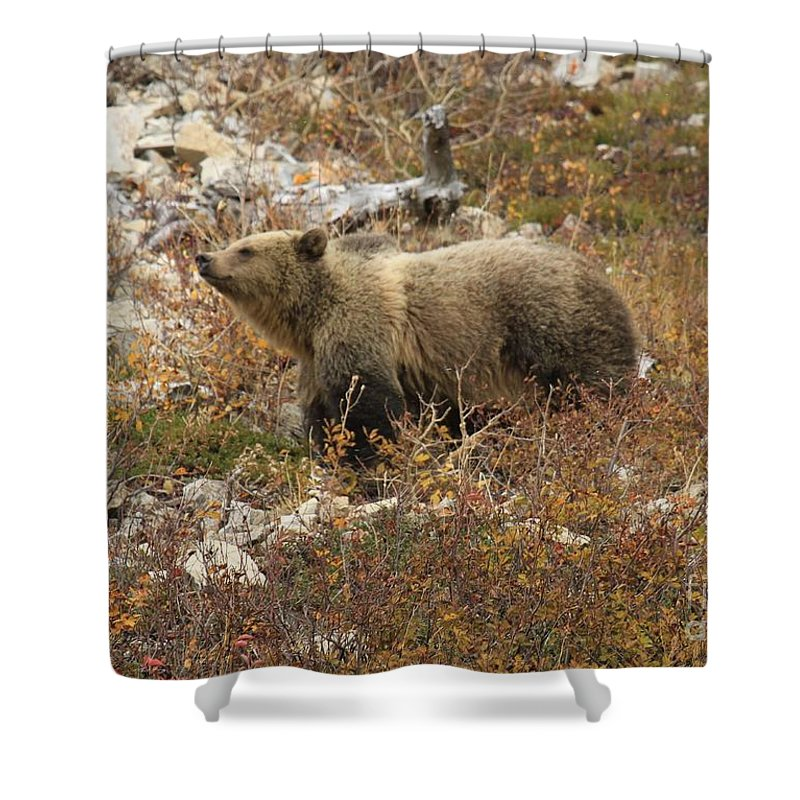 Grizzly Bear Shower Curtain featuring the photograph A Breath Of Fresh Air by Adam Jewell