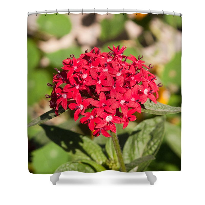 Red Shower Curtain Featuring The Photograph A Bunch Of Small Flowers By Ashish Agarwal