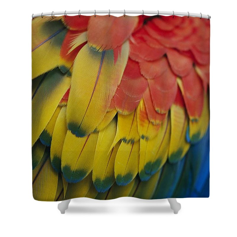 Saint Lucia Shower Curtain featuring the photograph A Close-up View Of A Parrots Rainbow by Todd Gipstein