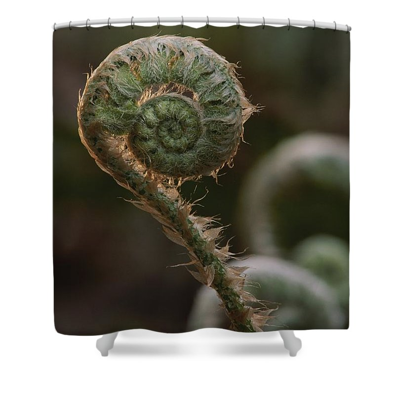North America Shower Curtain featuring the photograph A Close View Of A Fiddlehead Fern Frond by George F. Mobley