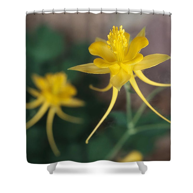 Subject Shower Curtain featuring the photograph A Close View Of A Yellow Columbine by Melissa Farlow