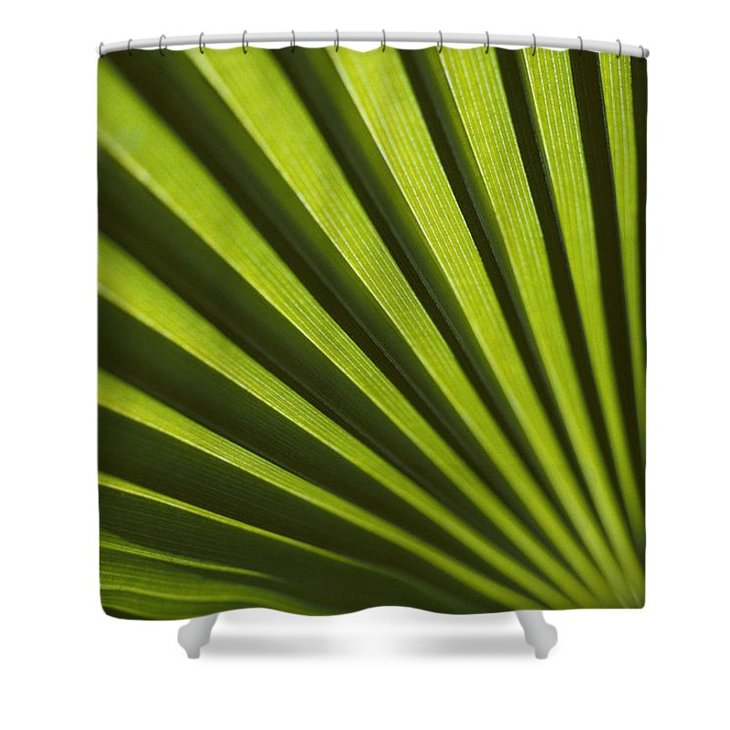 Bermuda Island Shower Curtain featuring the photograph A Close View Of Sunlight Shining by Todd Gipstein