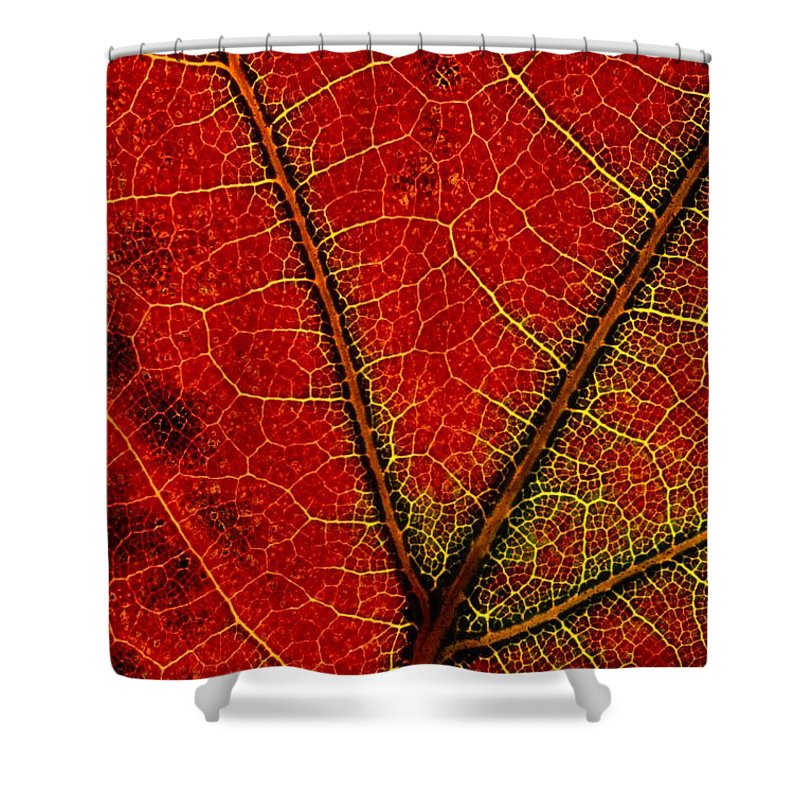 Shenandoah Valley Shower Curtain featuring the photograph A Close View Of The Veins Of A Colorful by George F. Mobley