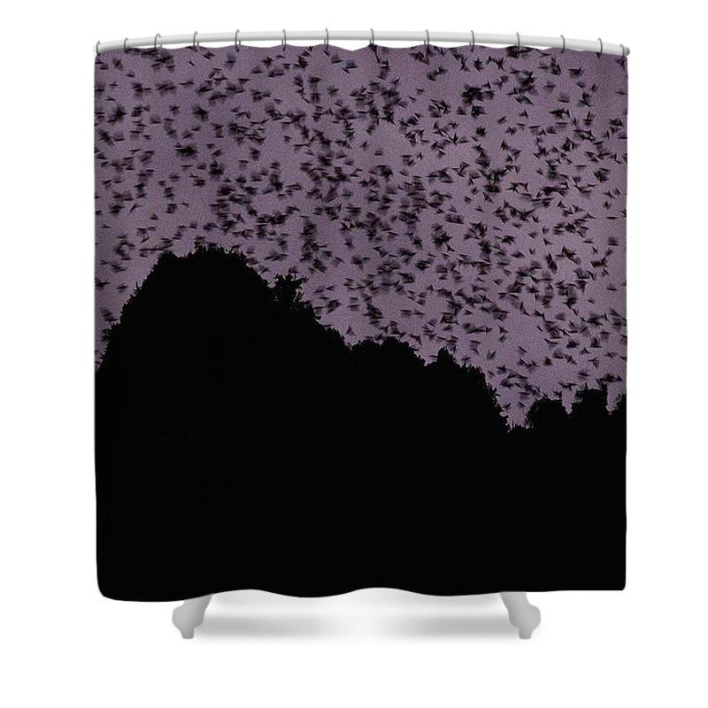 Sarawak State Shower Curtain featuring the photograph A Cloud Of Bats Fills The Twilight Sky by Mattias Klum