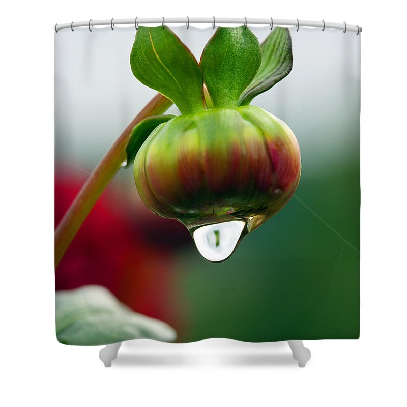 Macro Rain Drop Print Shower Curtain featuring the photograph A Drop So Sweet by Marie Jamieson