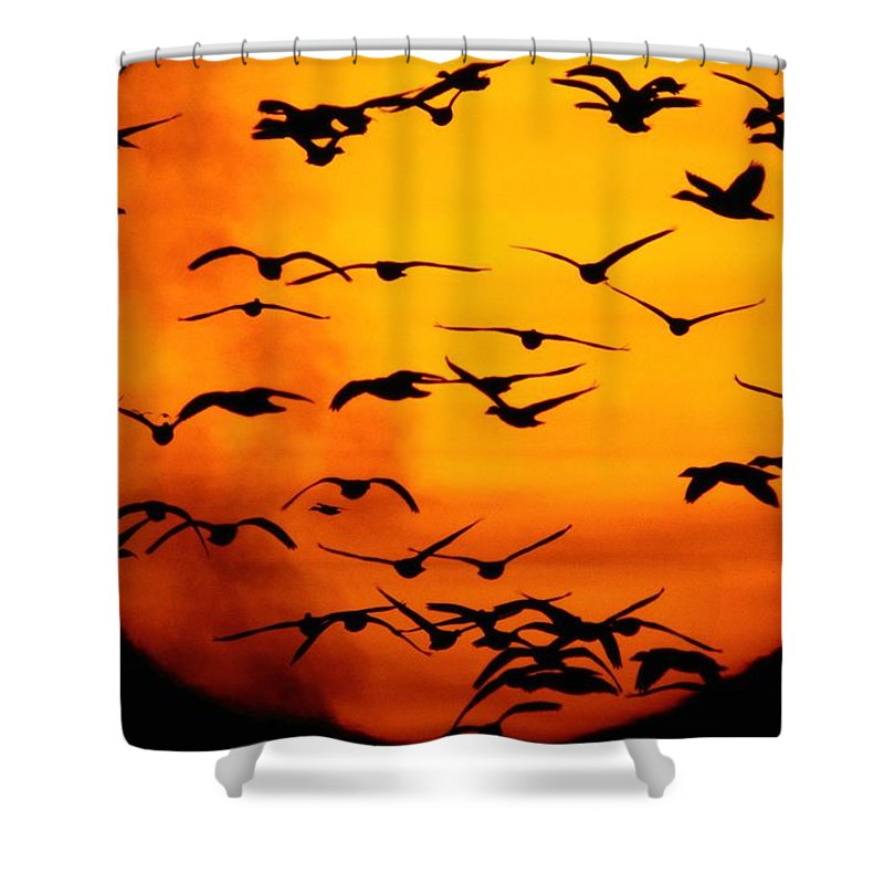 Animals Shower Curtain featuring the photograph A Flock Of Geese Is Silhouetted by Joel Sartore