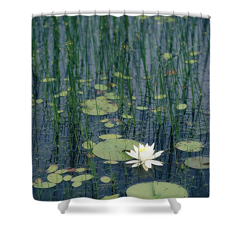 North America Shower Curtain featuring the photograph A Flowering Water Lily In Black by Skip Brown