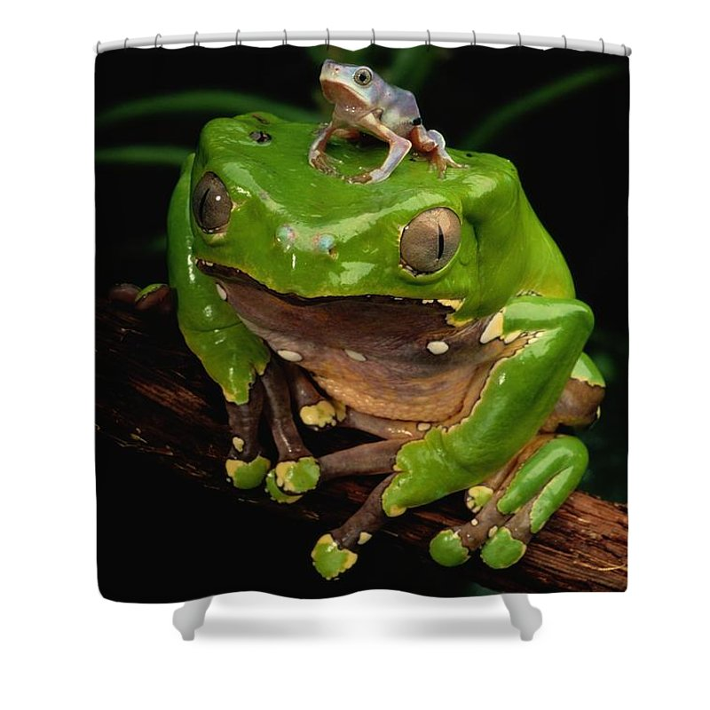Animals Shower Curtain featuring the photograph A Frog Phylomedusa Bicolor Perched by George Grall