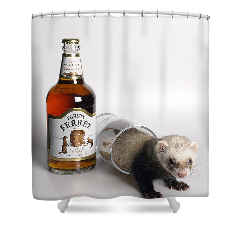 Beer Shower Curtain featuring the photograph A Glass Of Fursty Ferret by Howard Kennedy