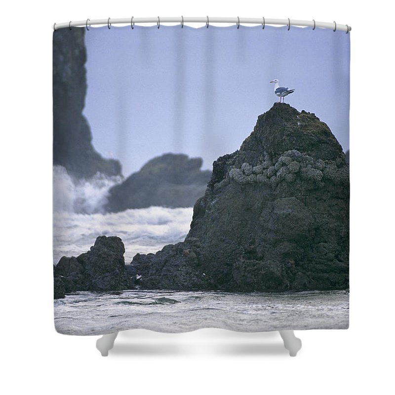 Cannon Beach Shower Curtain featuring the photograph A Gull Sits On A Rock At Cannon Beach by Phil Schermeister