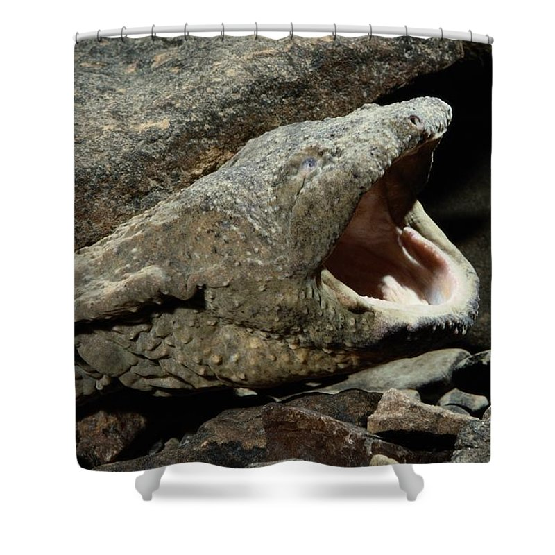 United States Shower Curtain featuring the photograph A Hellbender Salamander In Its Rocky by George Grall