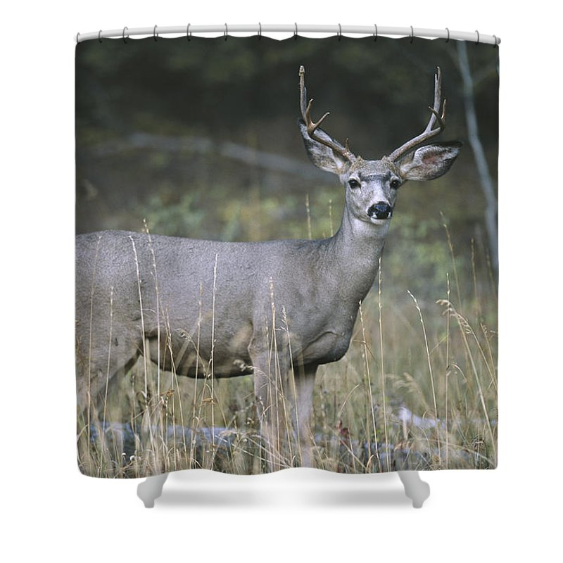 Anatomy Shower Curtain featuring the photograph A Large Antlered White-tailed Deer by Melissa Farlow