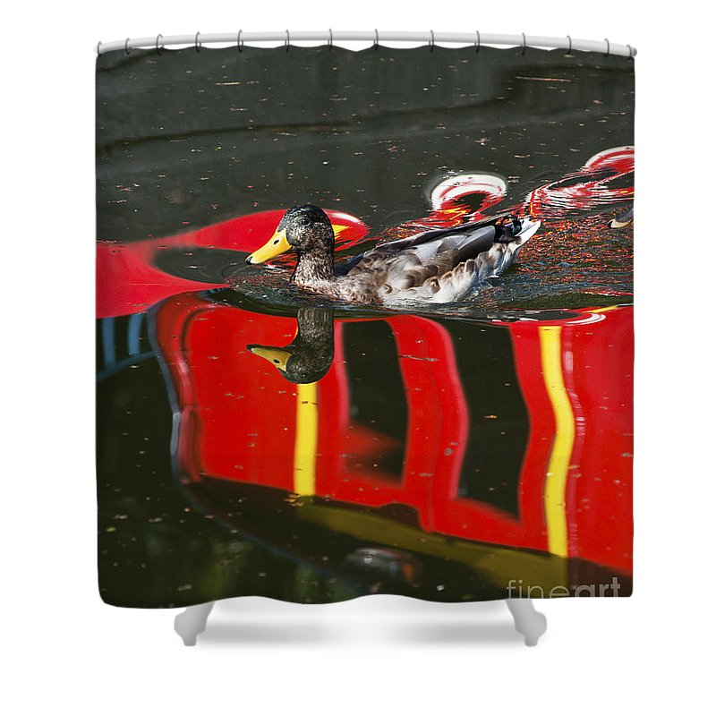 Birmingham Shower Curtain featuring the photograph A Mallard Duck On The Canal by Andrew Michael