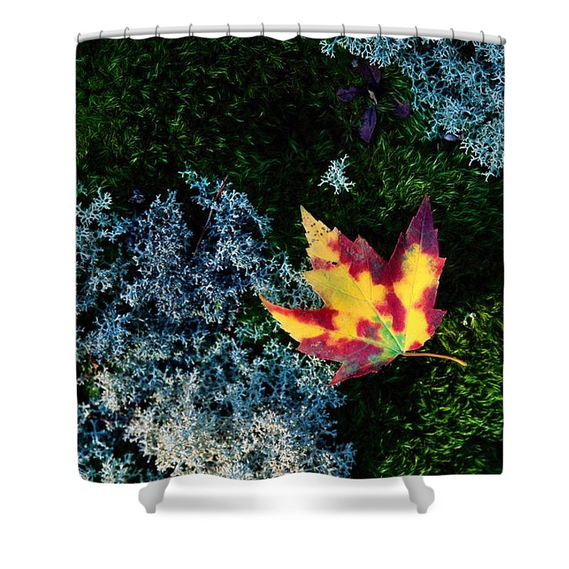 Shenandoah Valley Shower Curtain featuring the photograph A Maple Leaf Lies On A Bed Of Moss by George F. Mobley