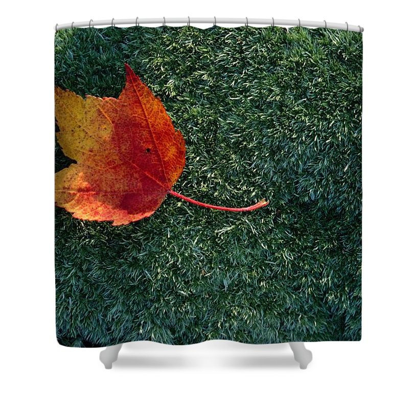 Shenandoah Valley Shower Curtain featuring the photograph A Maple Leaf Lies On Emerald Moss by George F. Mobley