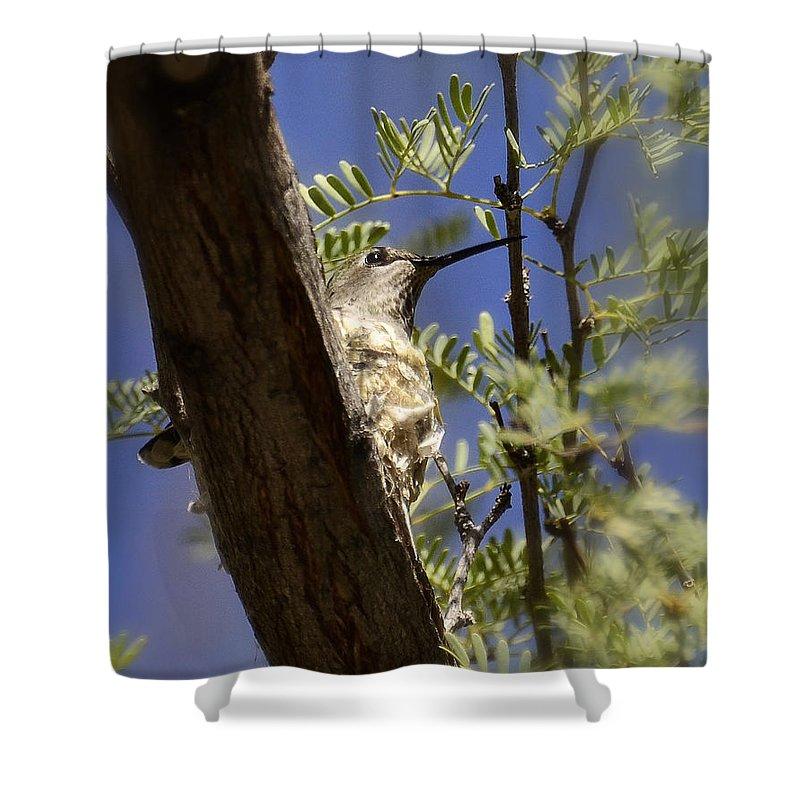 Hummingbird Shower Curtain featuring the photograph A Nesting Hummingbird by Saija Lehtonen