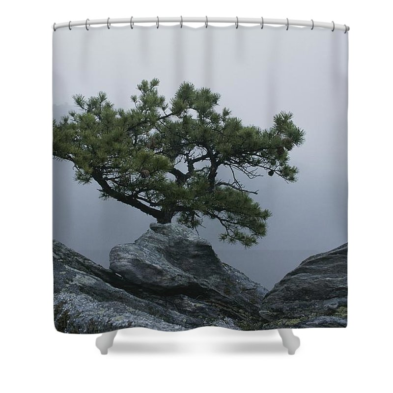 North America Shower Curtain featuring the photograph A Pine Tree Clings To A Rocky Ridge by George F. Mobley