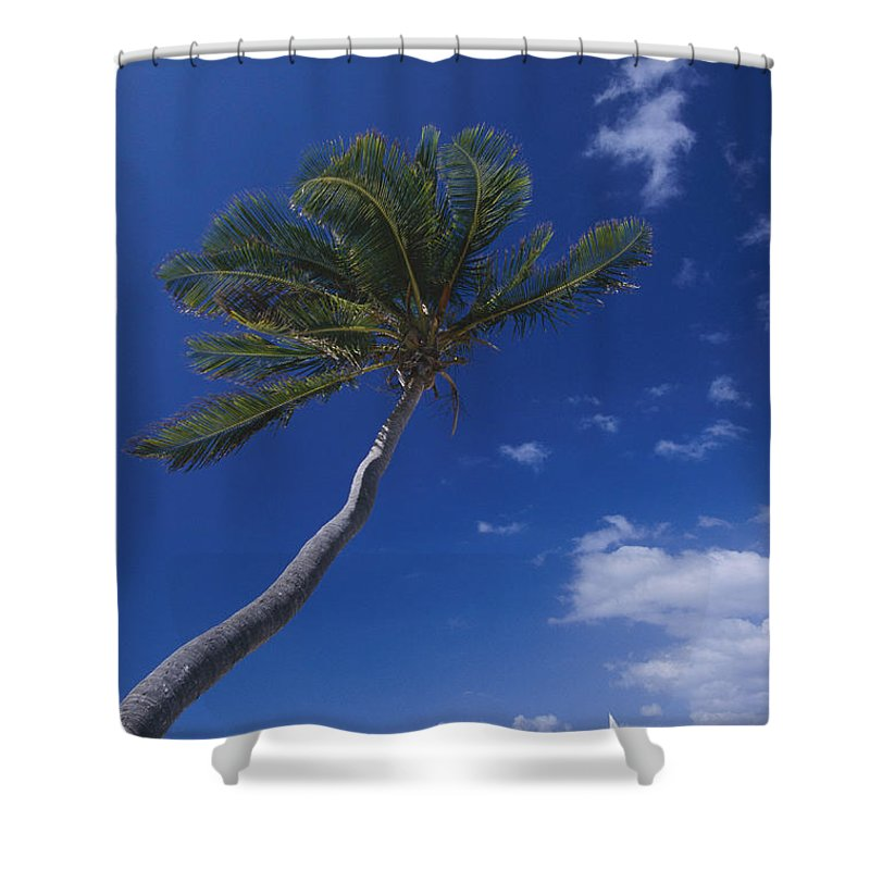 Peter Island Shower Curtain featuring the photograph A Scenic View Of A Palm Tree by Todd Gipstein