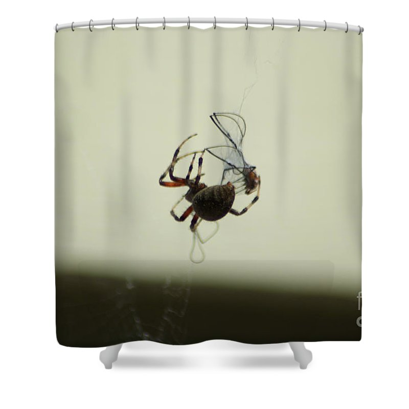 Landscape Shower Curtain featuring the photograph A Tasty Morsel For Later by Tom Luca